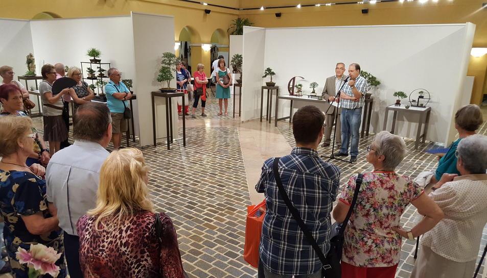 El món dels bonsais omple un any més el Pati del Palau de la Diputació
