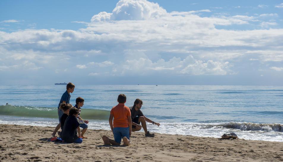 Quatre tortugues rescatades al Delta i a Tarragona tornen al mar recuperades