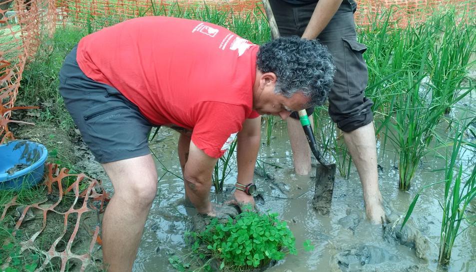 Un moment de la plantació