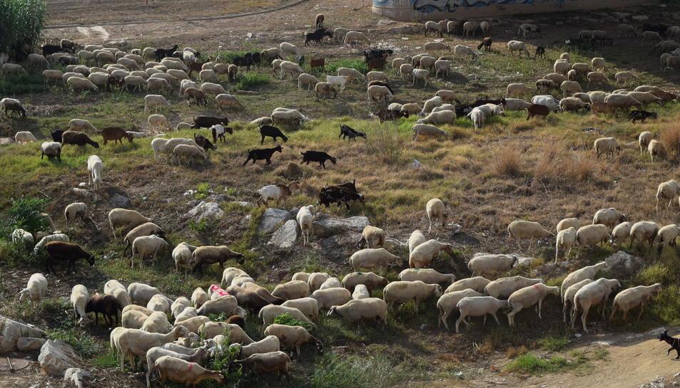 Els gossos controlaven els bens sota l'atenta mirada dels ramaders.