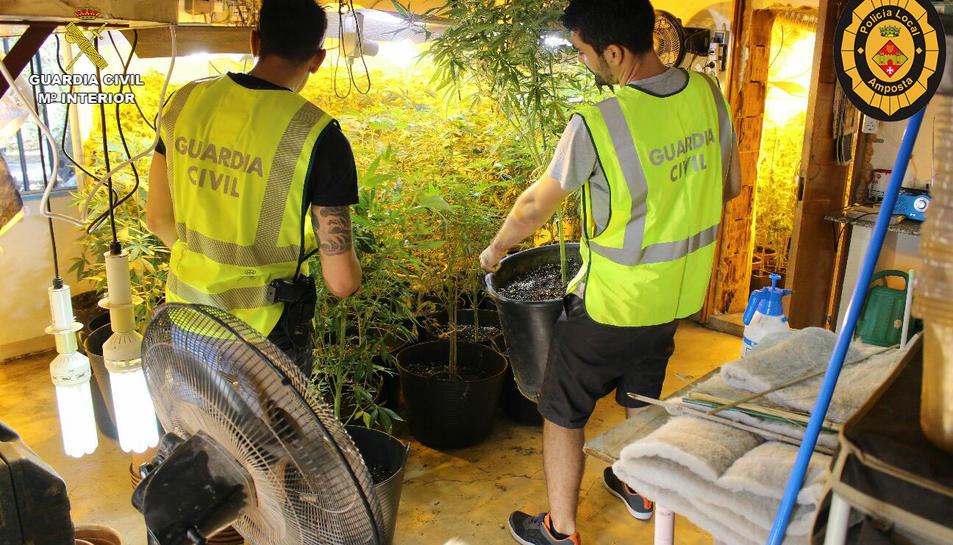 Dos agents de la Guàrdia Civil desmantellen una plantació de marihuana a Amposta. Imatge publicada el 30 de setembre de 2016
