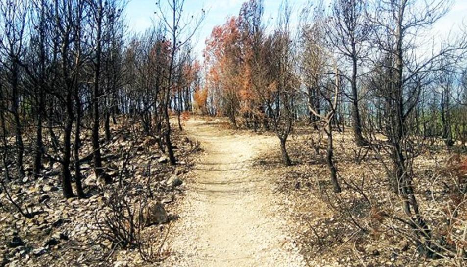 Les flames van cremar 9,6 hectàrees de pi blanc i matoll entre el 22 i el 24 d'agost.