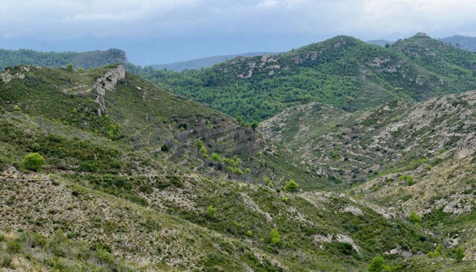 Cor de la serra de Cardó, on es vol obrir una de les pistes forestals.