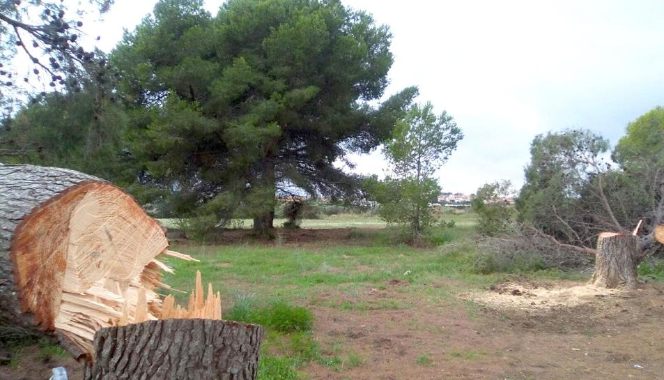 Imatge d'aquest dijous al migdia de la tala dels arbres.