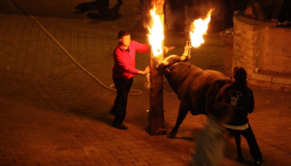 Imatge d'arxiu dels preparatius d'un bou embolat a Aldover.