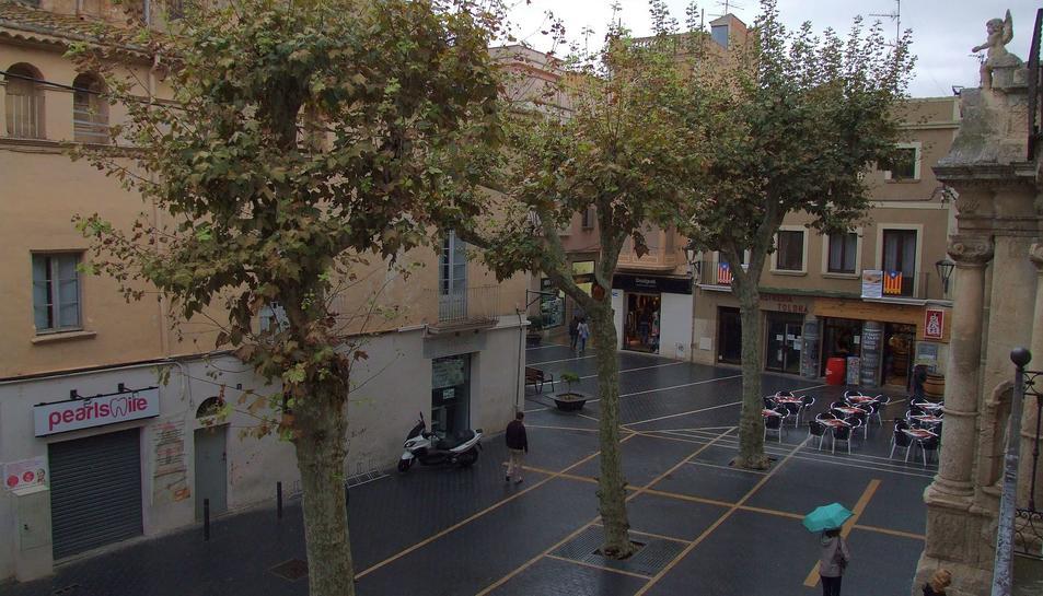 Els tres arbres de la plaça Vella que seran retirats al llarg d'aquesta setmana.