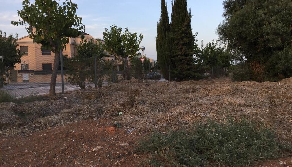 El grup polític denuncia brutícia i restes de poda d'arbustos urbans a