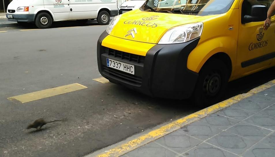 L'animal corria davant aquest cotxe de Correus.
