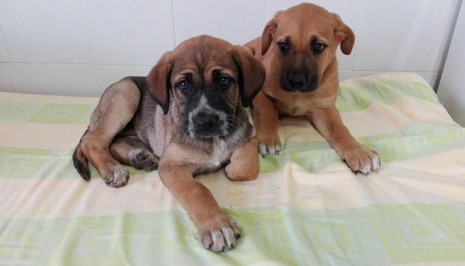 Dos cadells de la protectora de Tarragona.