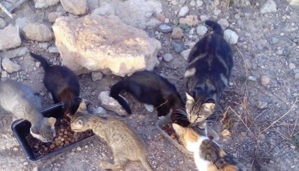 Imatge d'alguns dels gats abandonats a les Gavarres.