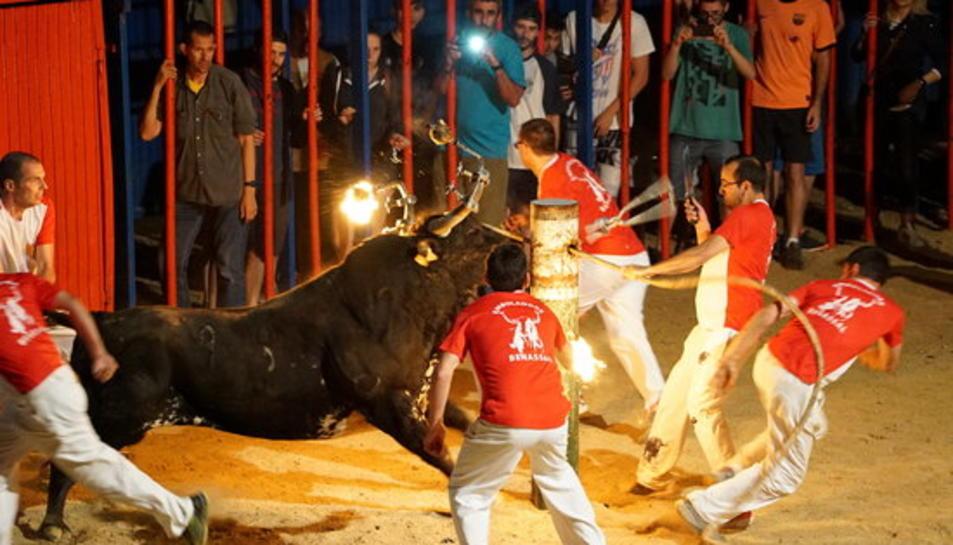 Un dels bous embolats del concurs que va tenir lloc al concurs de Sant Jaume d'Enveja el passat 25 de juny.