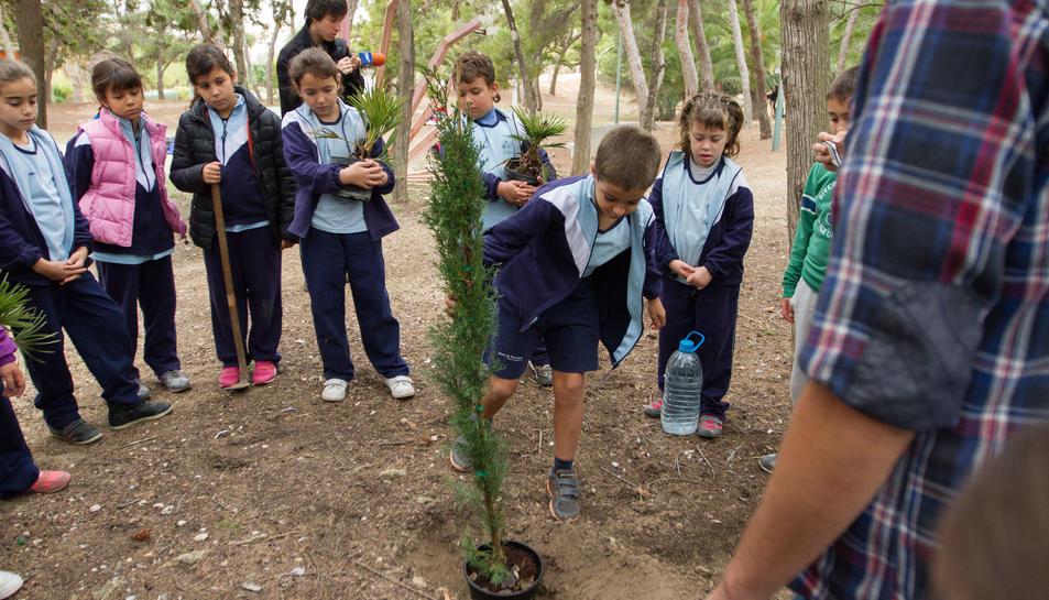 Imatge d'arxiu d'una plantada d'arbres escolar.