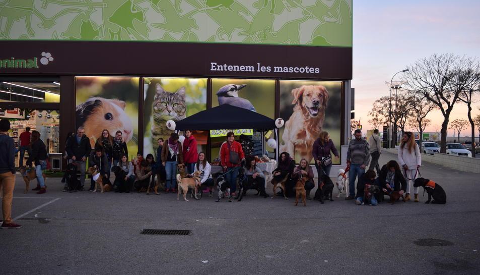 L'esdeveniment ha acollit una vintena de gossos.