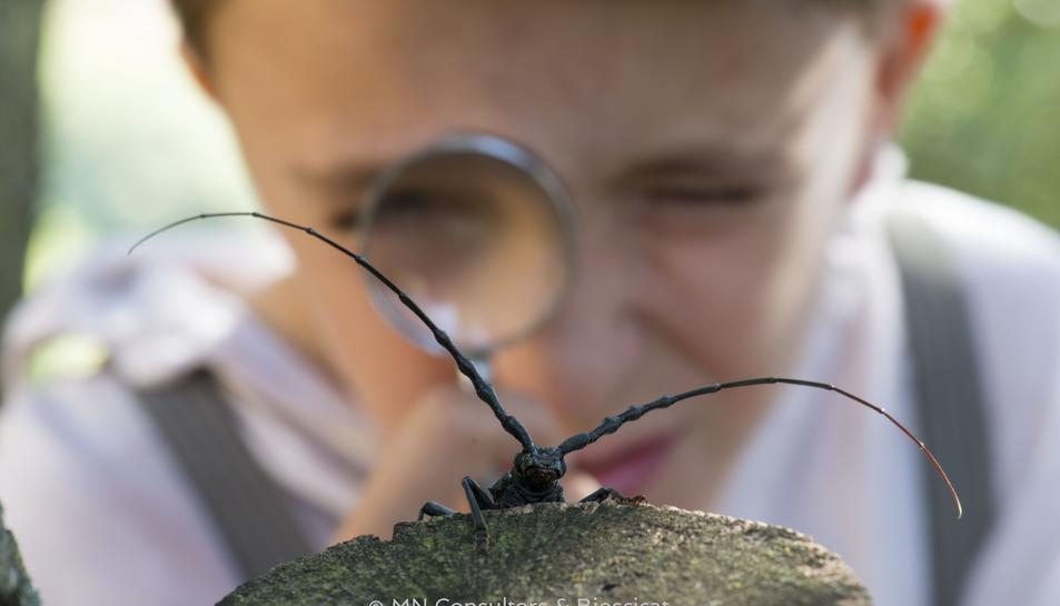 El documental es centra en l'insecte la 'Somereta del Montsant', endèmic del sud de Catalunya i icona de la conservació.