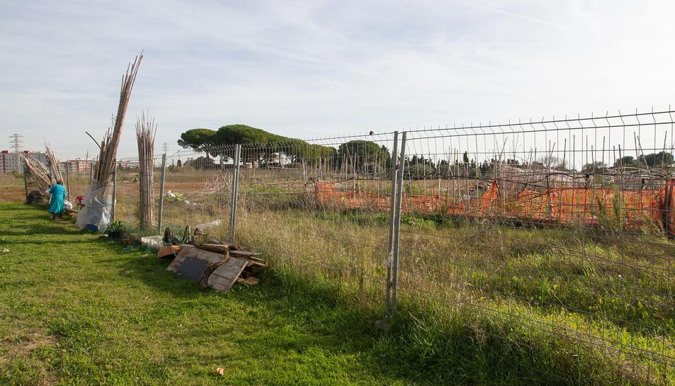Els cultius propers a l'Estadi seran reubicats.