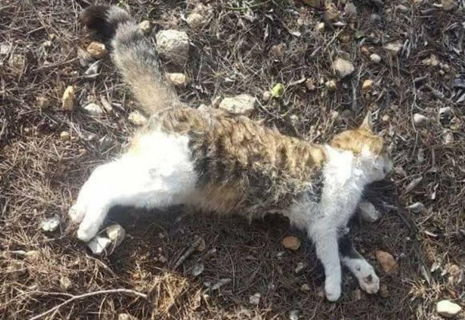 Investiguen un veí de la Secuita per matar gats amb un llaç