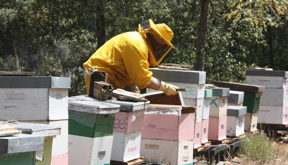 Imatge d'arxiu d'un apicultor treballant.