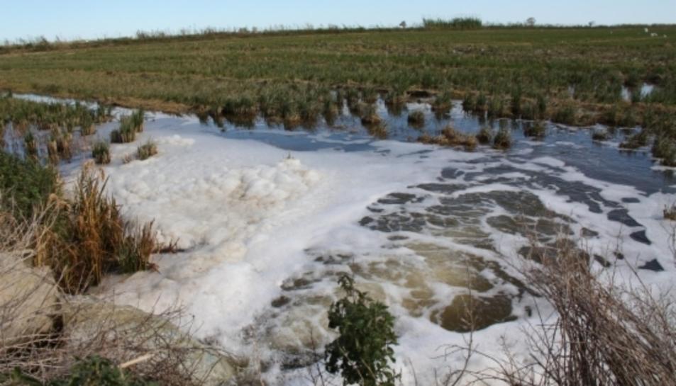 Inundació amb aigua salada per lluitar contra el caragol maçana i complir els requisits dels ajuts agroambientals en un camp d'arròs al terme de Sant Jaume d'Enveja.