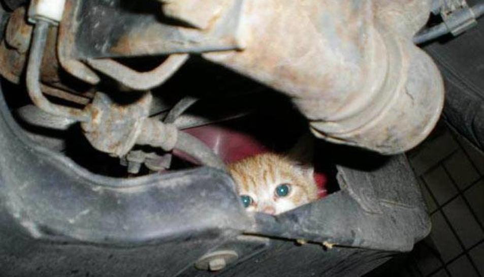 Un petit gat amagat a l'interior del capó d'un vehicle per escalfar-se.