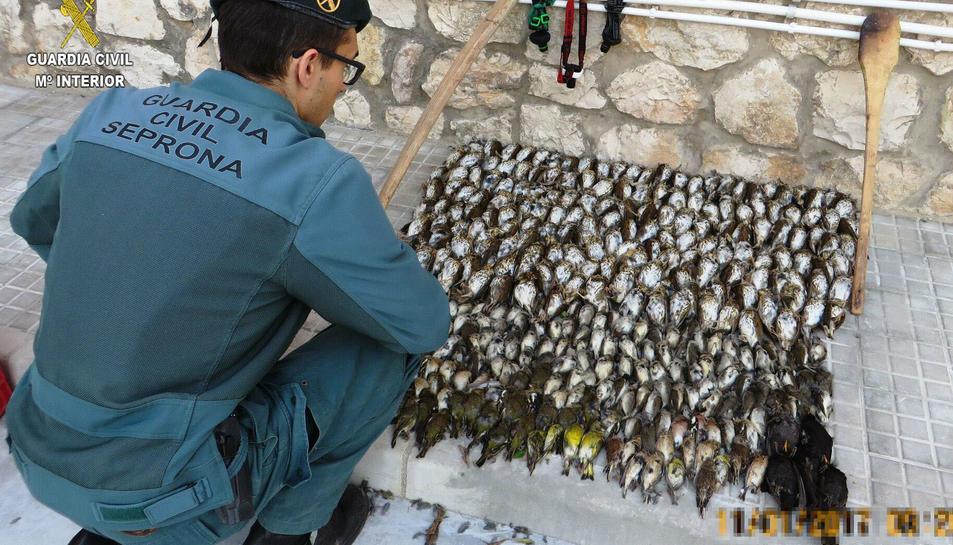 Els agents de la Guàrdia Civil van intervenir pals de fusta que els homes usaven per matar a cops les aus.