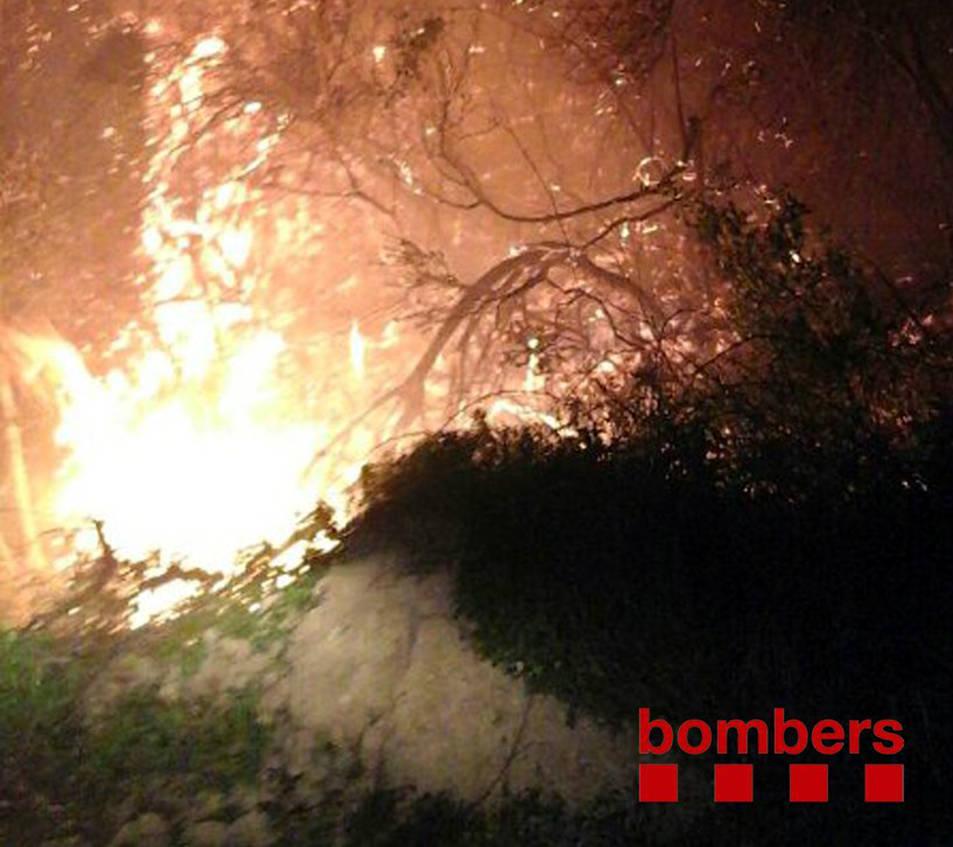 Detall d'uns matolls de vegetació cremant en l'incendi del Coll de Rajolers de Tortosa. Imatge del 19 de gener de 2017 (Vertical)