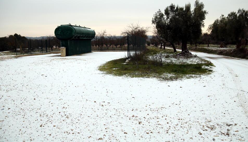 Imatge d'arxiu d'un camp amb neu als Ports del passat 19 de gener, en la que va ser la primera nevada del 2017 a la demarcació de Tarragona.
