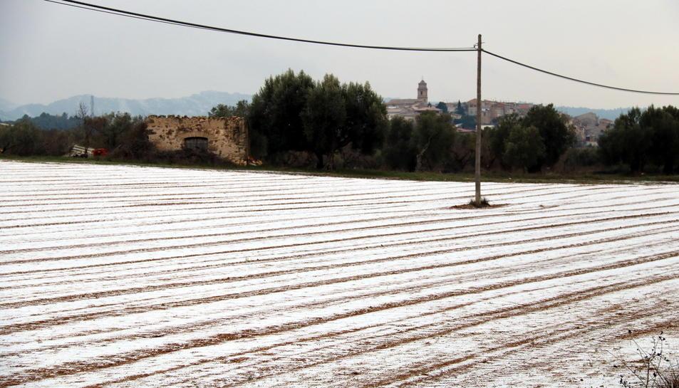 Un camp a Arnes, a la Terra Alta, nevat aquest dijous a la tarda.