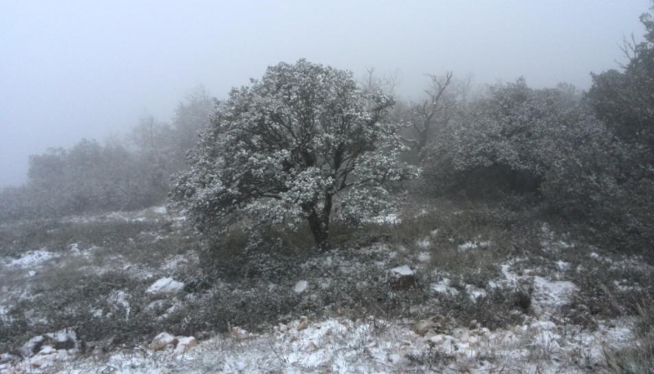 Al Montagut, al terme municipal de Querol, la neu deixa aquest paisatge.