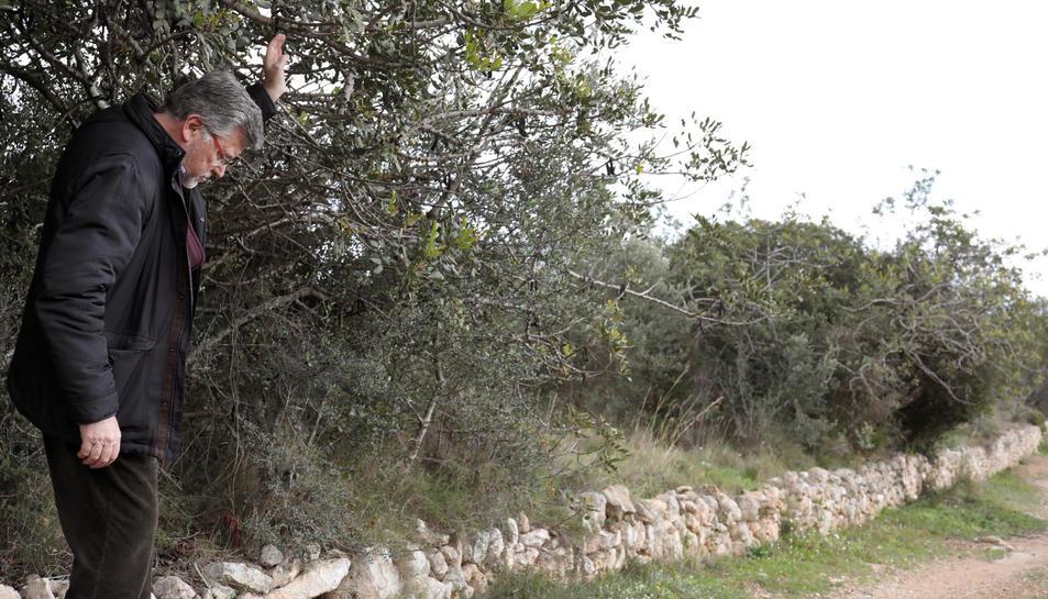 En aquesta zona de la Muntanyeta de Sant Pere, s'ha detecta la presència de senglars.
