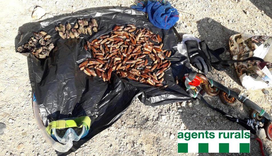 Dàtils de mar comissats pels Agents Rurals al Perelló (Baix Ebre). Imatge del gener de 2017