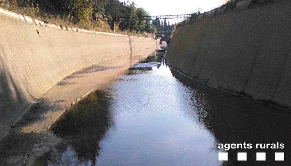 Imatge d ela zona del canal on es trobava l'animal rescatat.