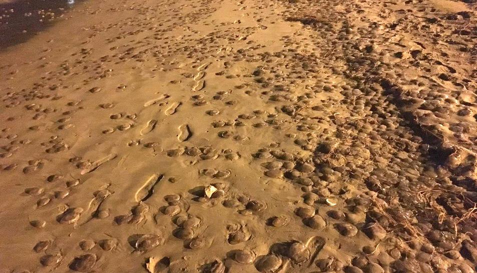 Imatge de les meduses a la sorra de la platja de la Arrabassada, dissabte passat.
