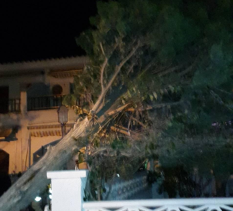 Un arbre arrencat per la força del vent a Cunit.