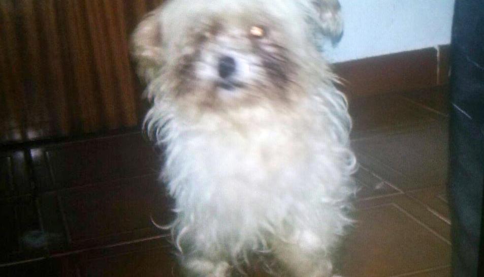 Un dels gossos «tancats» al pis de Sant Pere i Sant Pau.