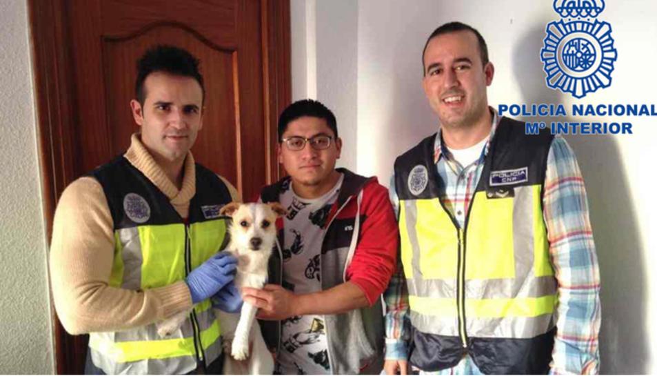 Els agents van detenir el sospitós per un presumpte delicte de maltractament a animal.