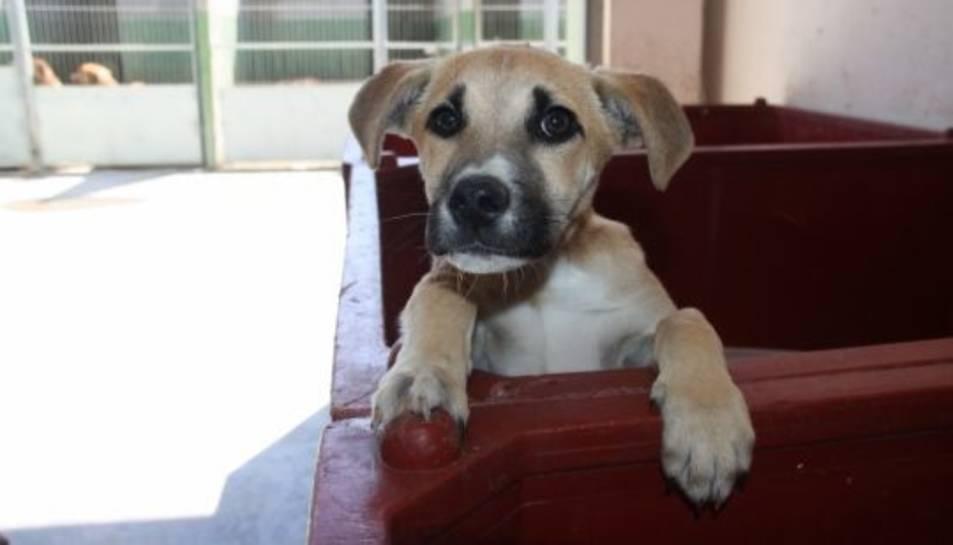 Una imatge d'arxiu d'un gos.