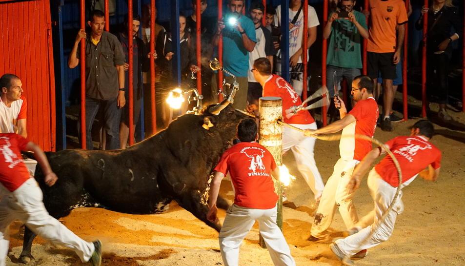 Un dels bous embolats del concurs que va tenir lloc a Sant Jaume d'Enveja el passat 25 de juny.
