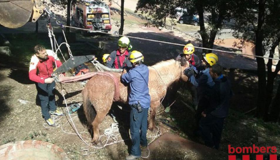 El cavall, un cop ha estat rescatat.