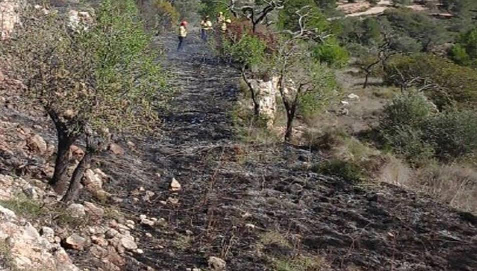 Pla obert dels bancals erms que ha cremat un foc al Pinell de Brai. Imatge de l'11 de març de 2017