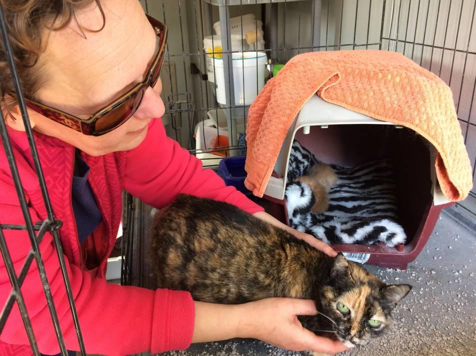 Vora 150 gats acabats de néixer van ser abandonats en contenidors el 2016