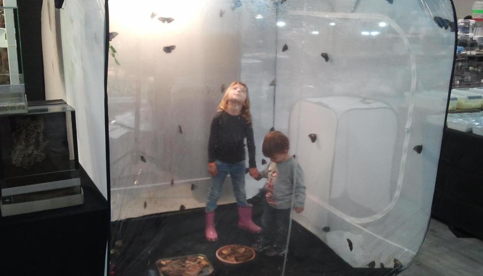 Uns nens observen el vol de papallones en una mostra anterior d'aquesta proposta de CaixaForum.
