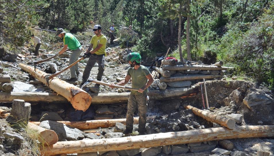 Imatge de voluntaris del projecte Boscos de Muntanya treballant al bosc en una edició del 2016.