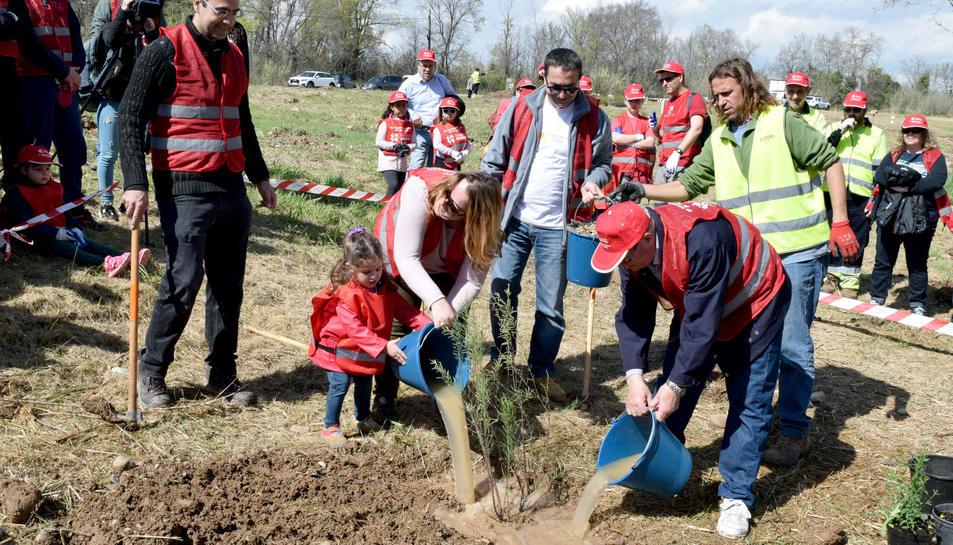 La plantada d'arbres (1)