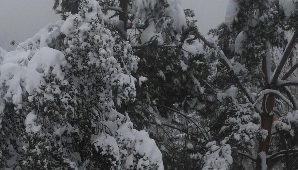La nevada en Prades (1)