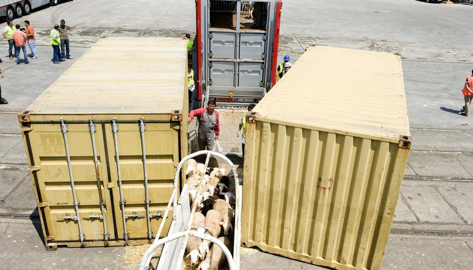 Imatge d'arxiu d'una càrrega de bestiar viu al Port de Tarragona.