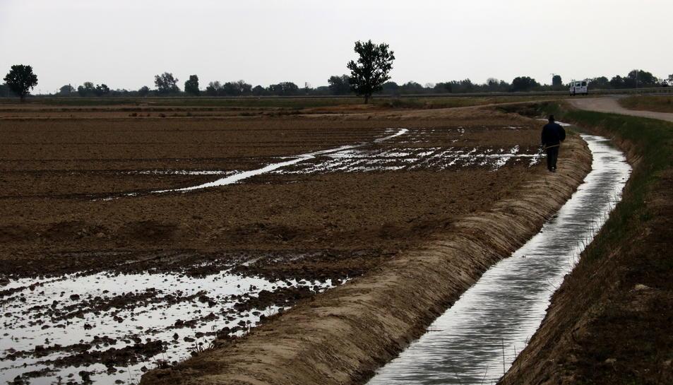 Pla general d'un pagès vigilant com s'omplen d'aigua els seus camps d'arròs a l'hemidelta esquerre de l'Ebre. Imatge del 20 d'abril de 2017