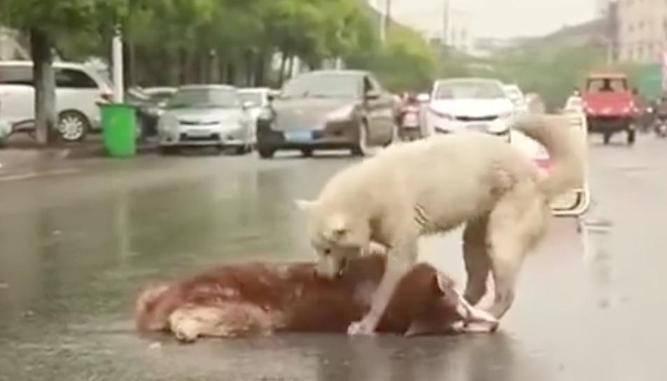 L'amistat entre els dos gossos es veu reflectida en els menys de 40 segons que dura el vídeo.