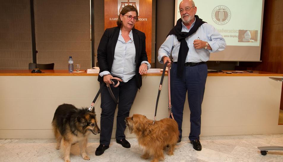 Un dels gossos de la magistrada, adoptat, havia estat maltractat.
