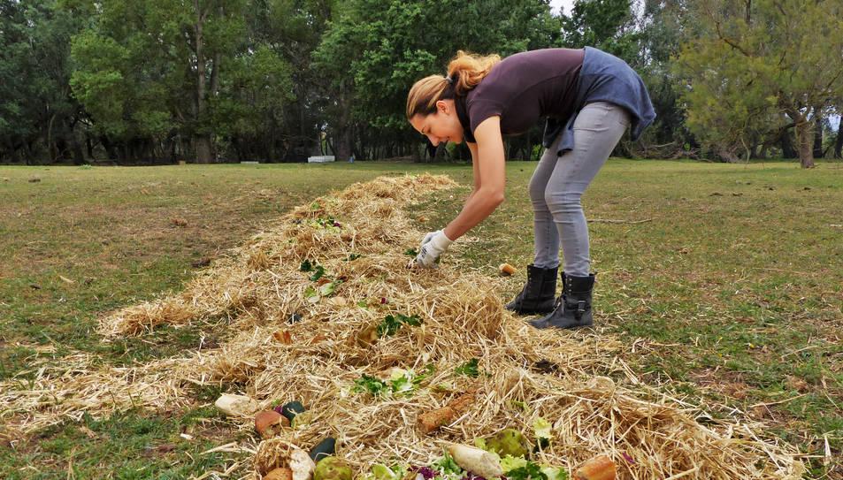 Una voluntària posant menjar pels bous que viuen a la illa.