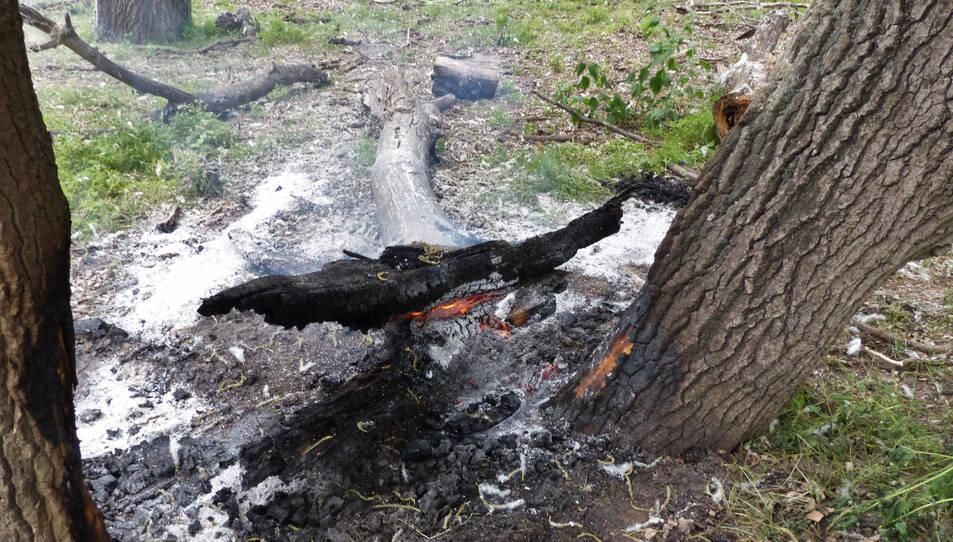 Restes d'arbres cremades a l'Illa dels bous de Vinallop.